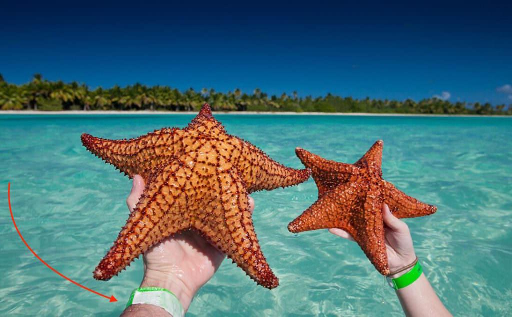 Звёзды острова Саоны