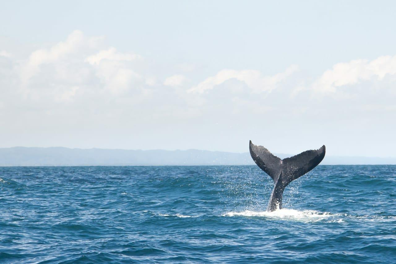 хвост кита торчит из воды